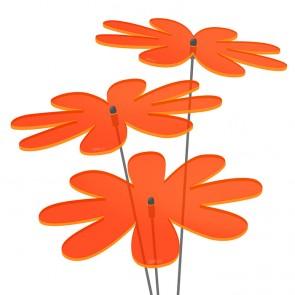 Sonnenfänger Gänseblümchen